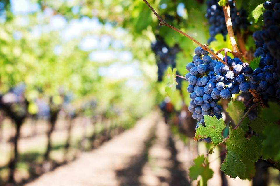 винное казино, поле для винного казино, казино, легальное казино, вино, бокал вина, красное вино, фишки, wine casino, алкоголь, алкогольные игры, купить винное казино, бутылки вина, бокалы, бокал с вином, белое вино, дегустация, гроздь винограда