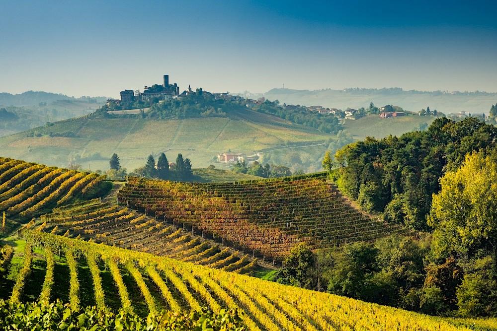 Gancia Prosecco, виноградники