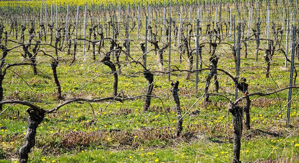 Sparkling marketing, просекко, prosecco, алкогольный маркетинг, итальянское игристое, итальянское вино, вино, виноградник