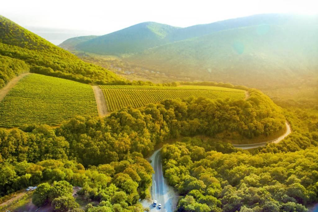 Abrau Estates, DCW Magazine, журнал о барах и алкоголе, тихие вина, абрау дюрсо, белое вино, красное вино, виноградник