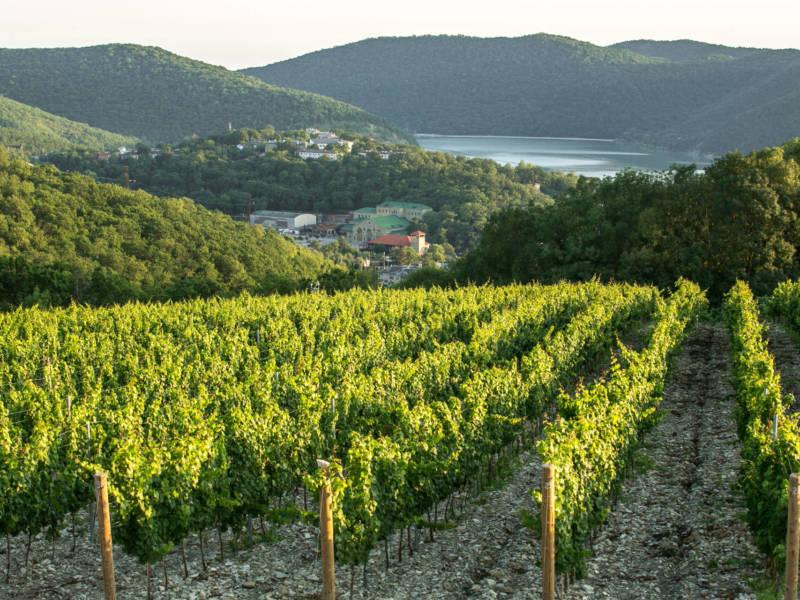 Abrau Estates, DCW Magazine, журнал о барах и алкоголе, тихие вина, абрау дюрсо, белое вино, красное вино